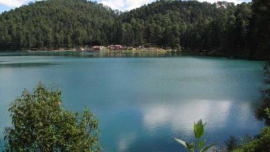 Toxicidad en Zirahuén afectaría vida de especies acuáticas 2 - Pátzcuaro Noticias