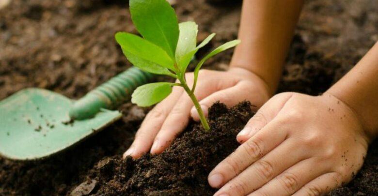Obligatorio tener un árbol por casa o habrá multa de $1576.34 anual, hasta plantar uno. 1 - Pátzcuaro Noticias