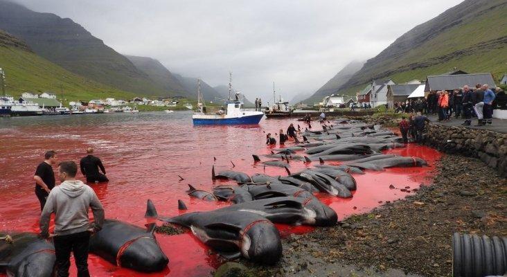 Matan a miles de delfines por tradición en Dinamarca 2 - Pátzcuaro Noticias