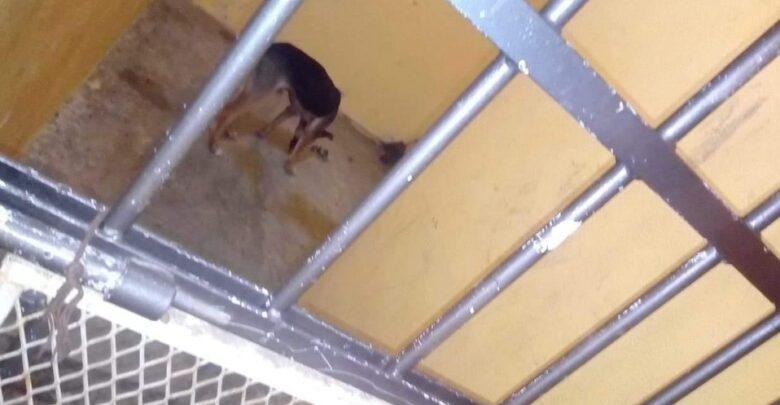 Alcalde en Oaxaca ordena encarcelar y dejar morir de hambre a perro por morder - Pátzcuaro Noticias