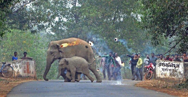Lanzan bombas de fuego a mamá y cría elefante, que huyen por deforestación 1 - Pátzcuaro Noticias