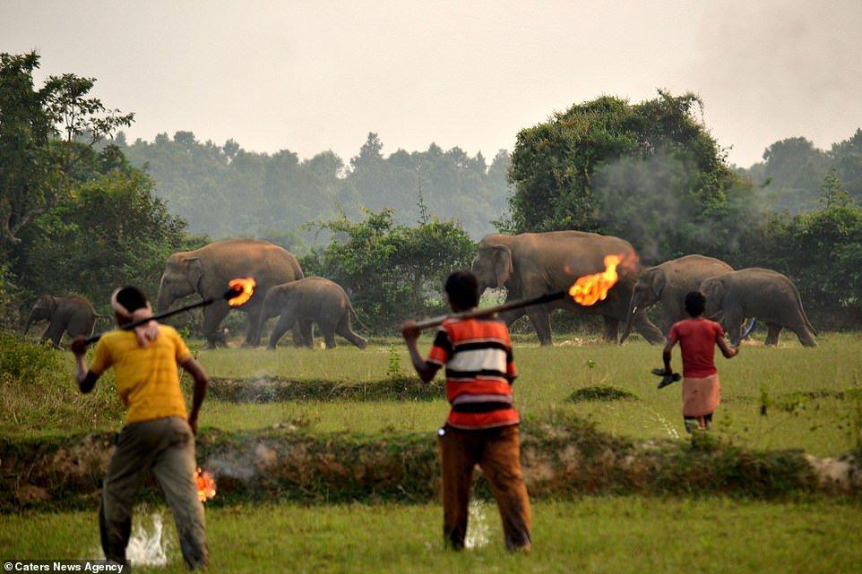 Lanzan bombas de fuego a mamá y cría elefante, que huyen por deforestación 4 - Pátzcuaro Noticias