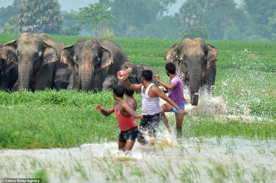 Lanzan bombas de fuego a mamá y cría elefante, que huyen por deforestación 6 - Pátzcuaro Noticias