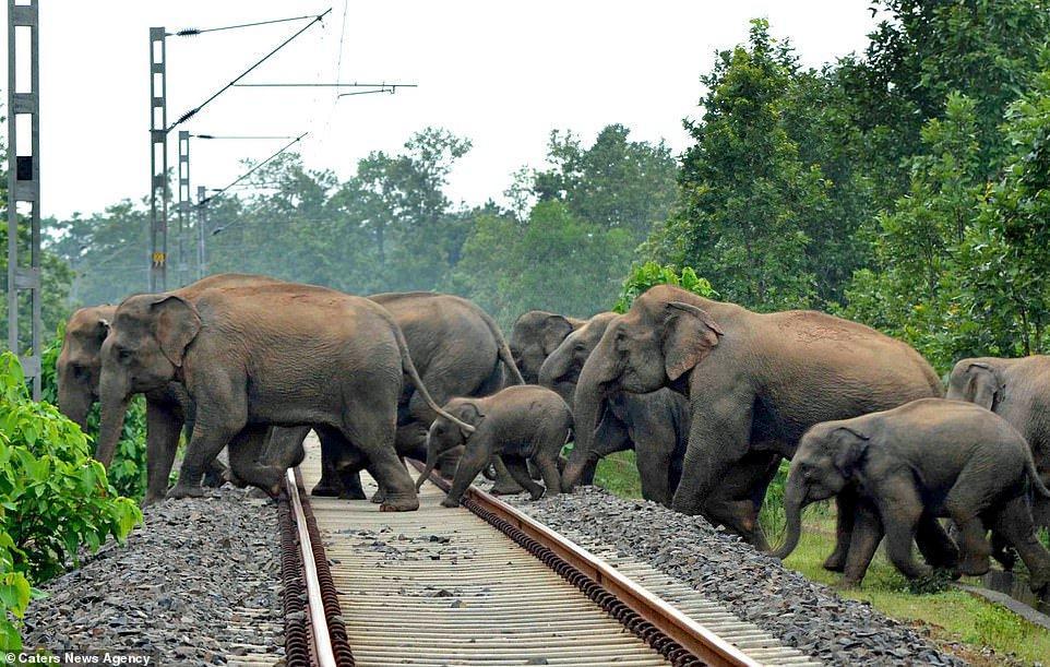 Lanzan bombas de fuego a mamá y cría elefante, que huyen por deforestación 2 - Pátzcuaro Noticias