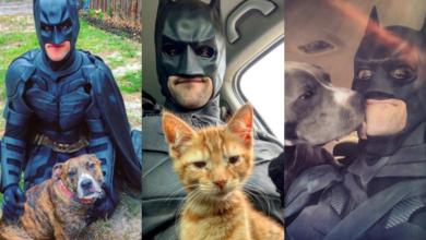 Batman rescata animales y les da un nuevo hogar