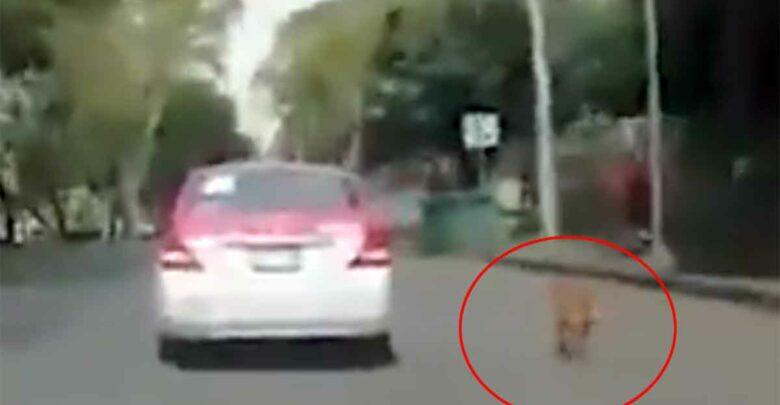 Perrito corre detrás de un taxi; lo bajaron para abandonarlo