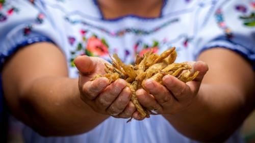 Galería de las comidas características de Pátzcuaro