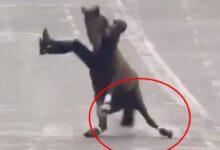 VIDEO: Jinete y caballo sufren aparatosa caída en desfile de la Revolución