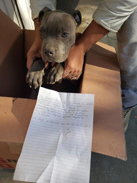 Niño dio en adopción a su perrito porque su papá lo maltrataba