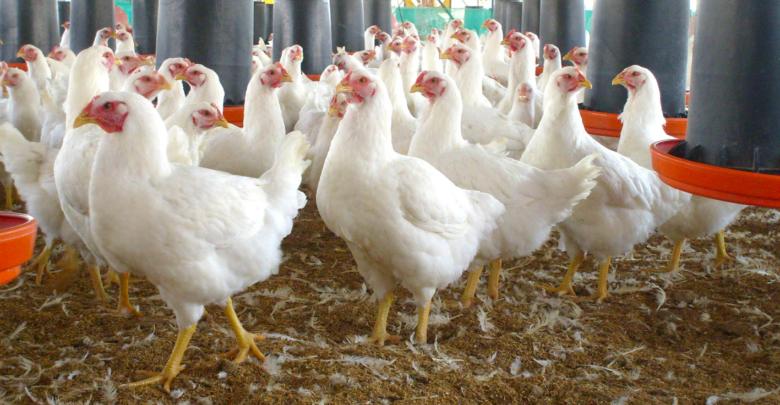 Surge un nuevo brote de Influenza Aviar (H5N6) en Filipinas