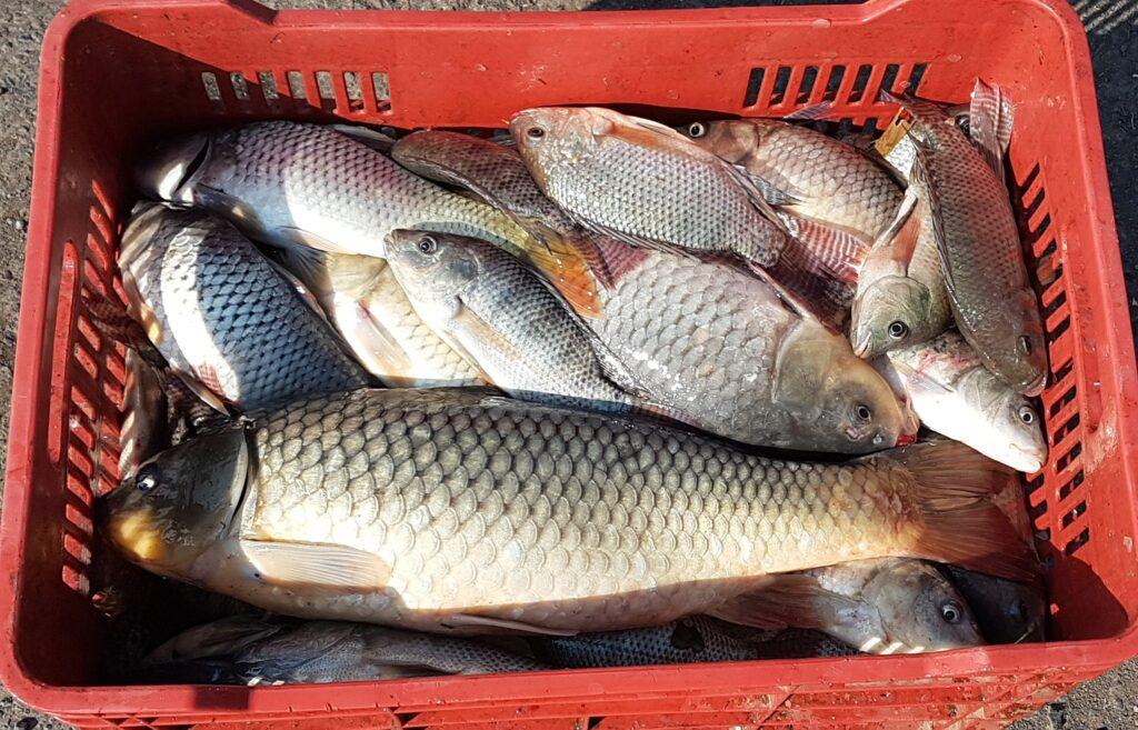 El canoísta Marcos Camilo Angel de Urandén regala pescado por COVID-19