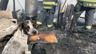 VIDEO: Un perro llora desconsolado después de que un incendio destruyera su hogar