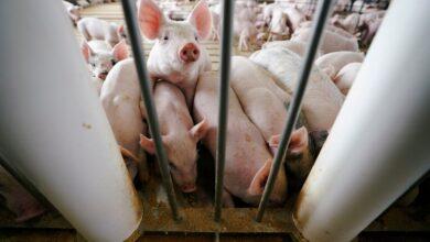 Alerta por nuevo virus en China; Saltaría con facilidad a los humanos