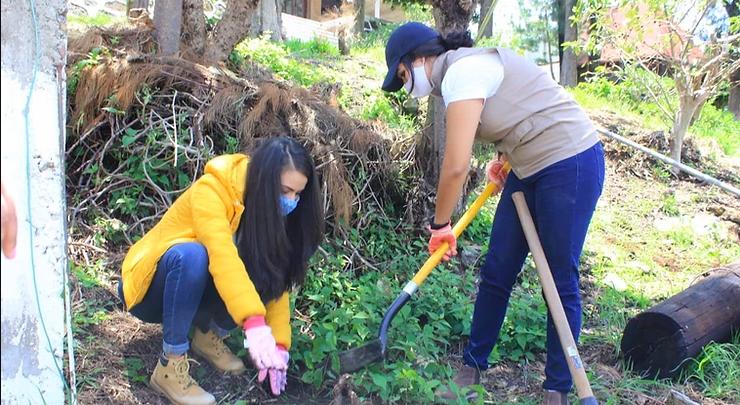 Reforestan la Isla Yunuén con 200 árboles