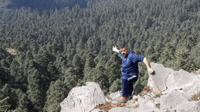 Talan bosques de la Monarca en Michoacán