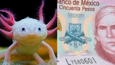 Así será el NUEVO billete de $50 pesos en México
