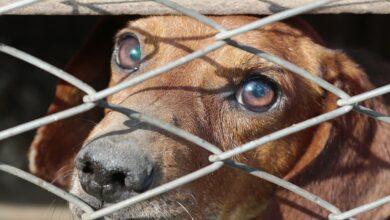 crueldad animal morelia michoacan