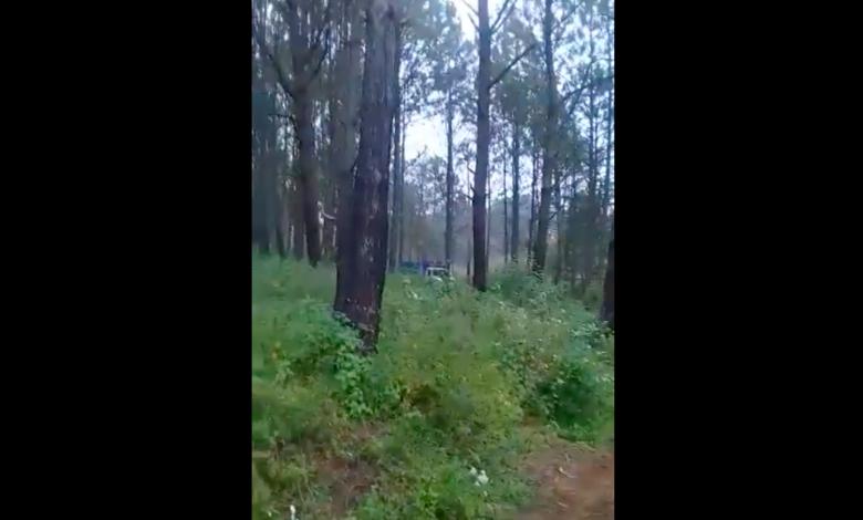 Talan bosque del Cerro Blanco de Pátzcuaro [FOTOS]